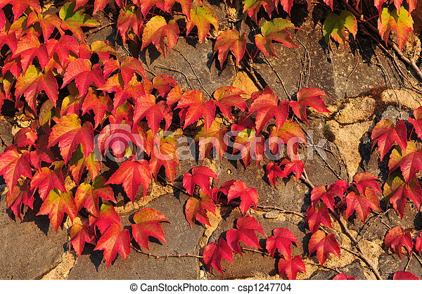 leaves on a wall - csp1247704