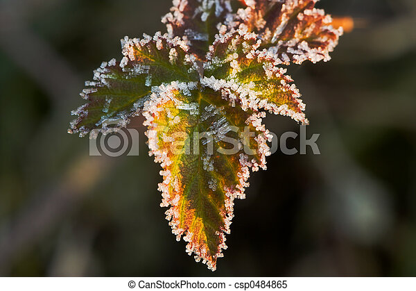 Leaves on a winter morning - csp0484865