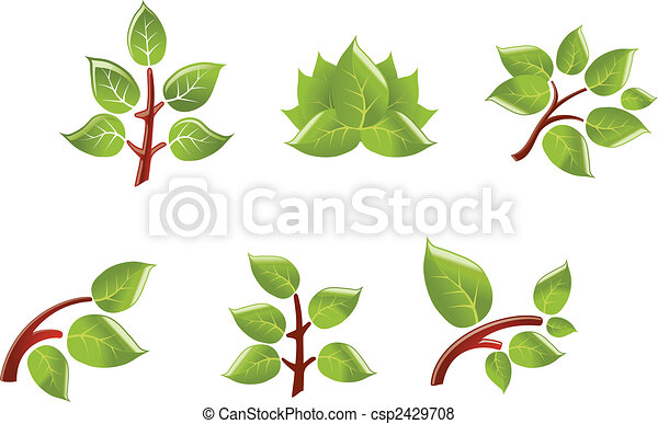 Leaves on branch - csp2429708