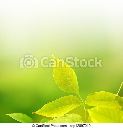 leaves on green background - csp12897210