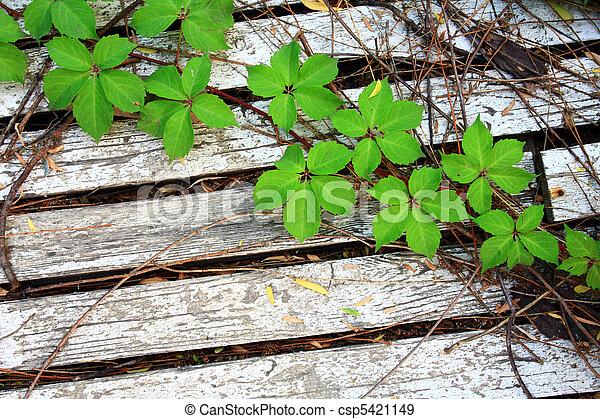 leaves on the floor - csp5421149