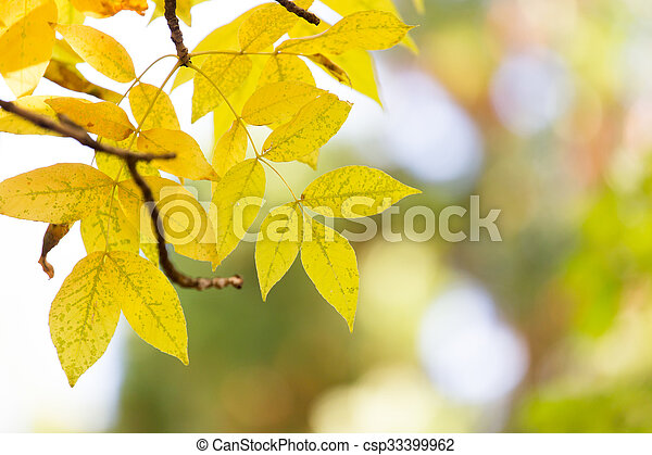 leaves on the tree in nature in autumn - csp33399962