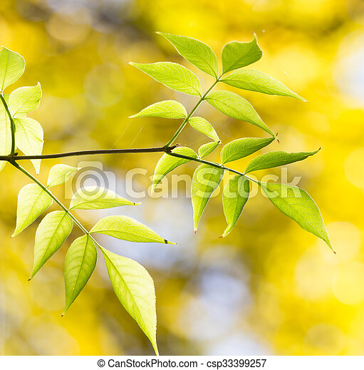 leaves on the tree in nature in autumn - csp33399257