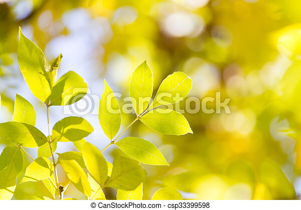 leaves on the tree in nature in autumn - csp33399598