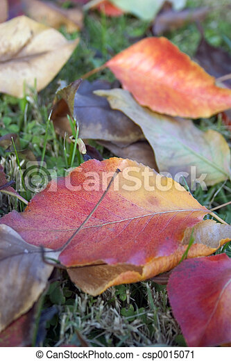 Leaves - csp0015071