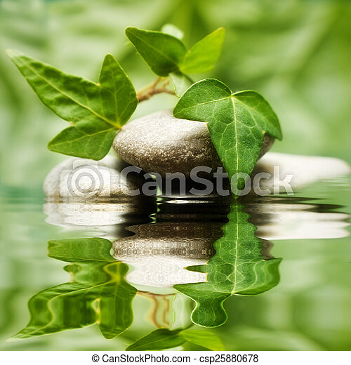 Leaves reflecting in the water - csp25880678