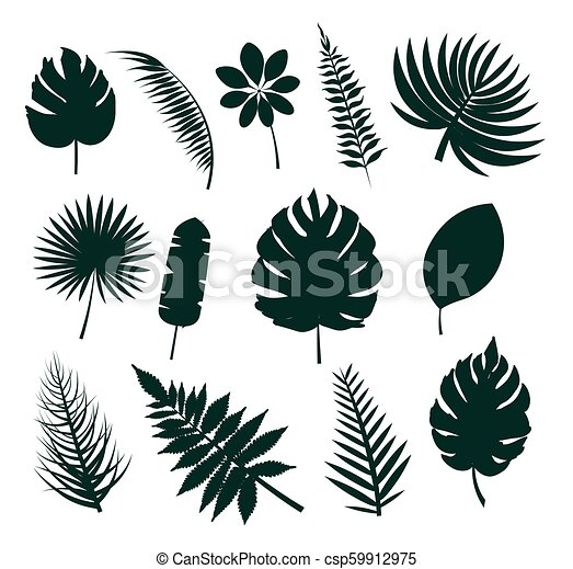 Leaves Silhouette Collection Vector Illustration Leaves Silhouette Collection Set Icons Colorless Images With Tropical Leaf Canstock You can modify, copy and distribute the vectors on tropical leaf in iconspng.com. https www canstockphoto com leaves silhouette collection vector 59912975 html
