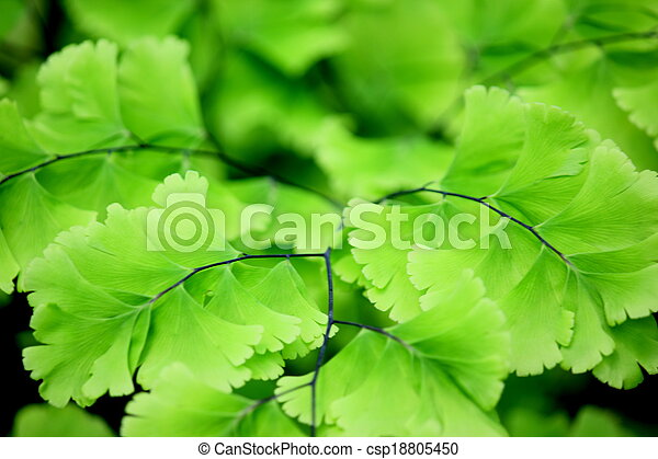 leaves - csp18805450