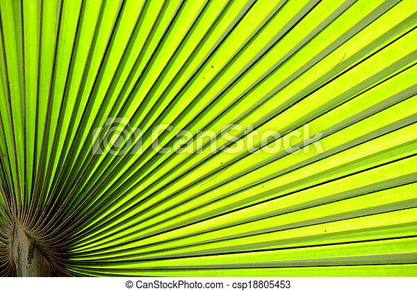 leaves - csp18805453