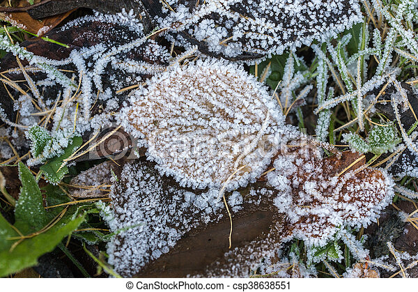 leaves with hoarfrost - csp38638551