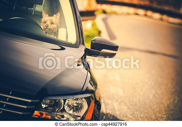 Leaving Dog in a Car - csp44927916