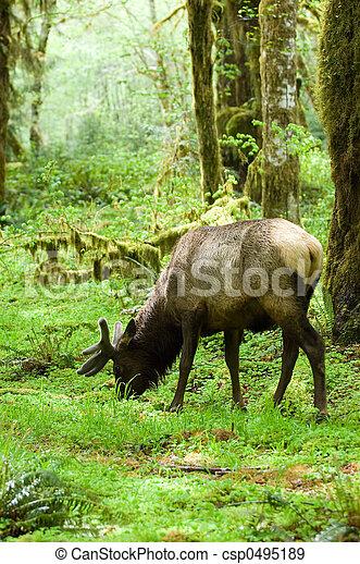 lebensraum, rainforest - csp0495189