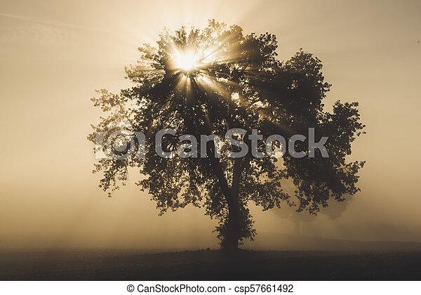 Ein Baum im Nebel - csp57661492