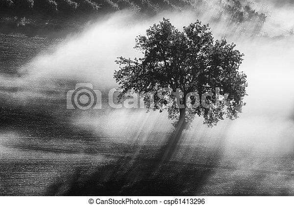 ledig, nebel, baum - csp61413296