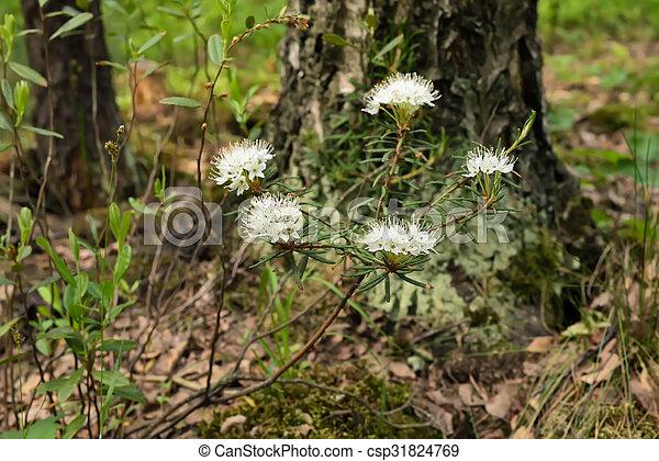 Planta de palustre inflamado - csp31824769