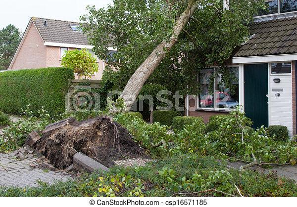 leeuwarden, slaan, 28, op, miljoen, oktober, beschadigen, zijn, 2013:, geschat, massief, storm, totaal, noorden, euro., heeft, honderd, nederland - csp16571185