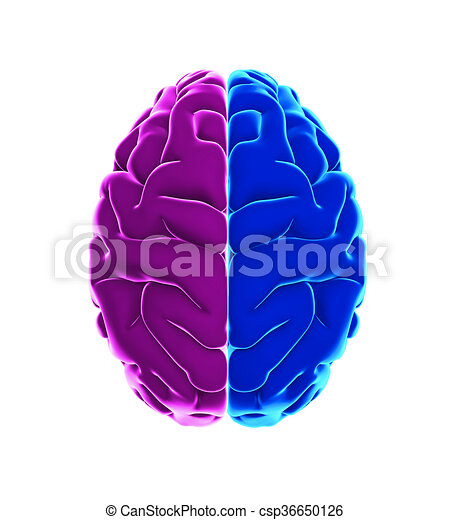 Left and right human brain anatomy illustration 3d render left and right human brain csp36650126 ccuart Choice Image