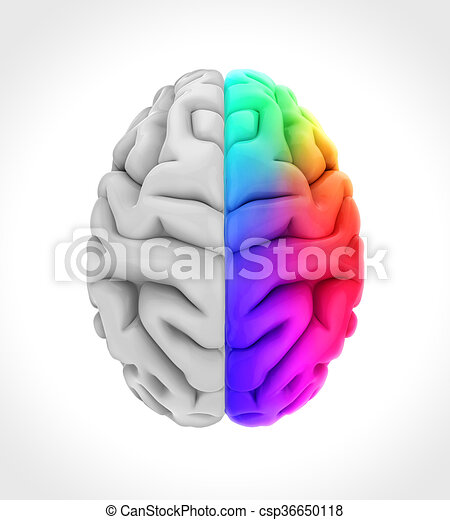 Left and right human brain anatomy illustration 3d render left and right human brain csp36650118 ccuart Choice Image
