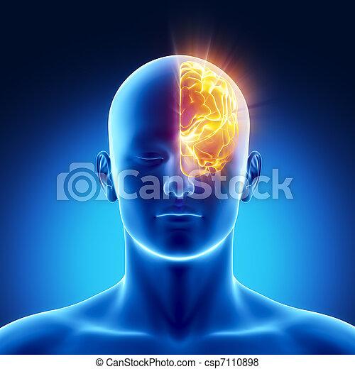 Left hemisphere concept - csp7110898