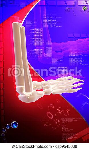 Leg bone - csp9545088