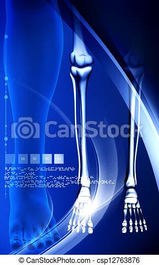 Leg bone - csp12763876