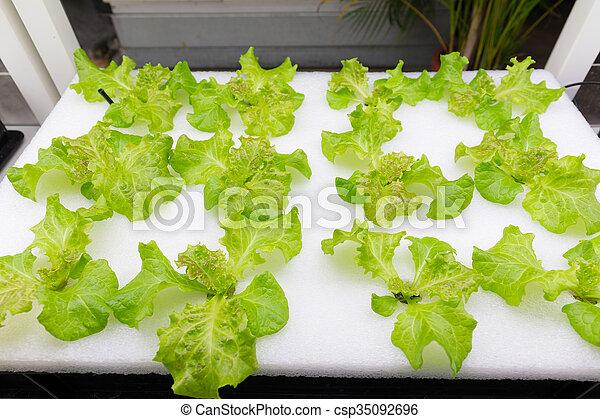 legumes, cultivo, hydroponics - csp35092696