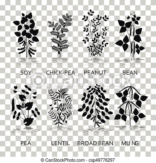 Legumes plants with leaves, pods and flowers. Silhouette icons with reflection on transparent background - csp49776297
