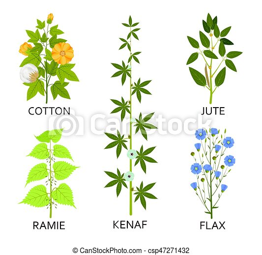 Legumes plants with leaves, pods and flowers - csp47271432