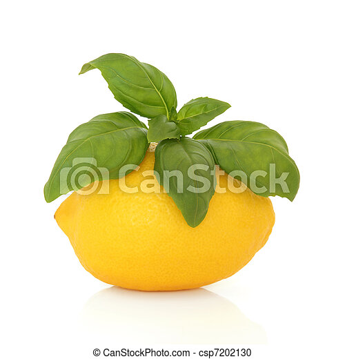 Lemon and Basil - csp7202130