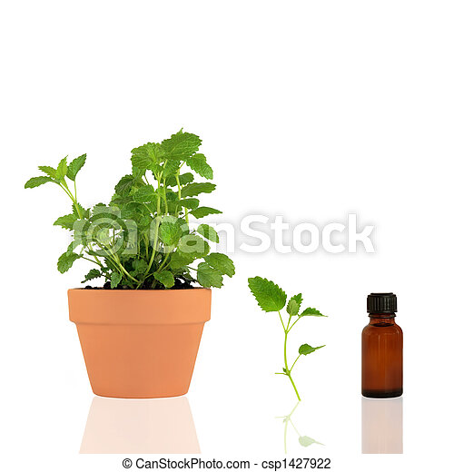 Lemon Balm Essential Oil - csp1427922