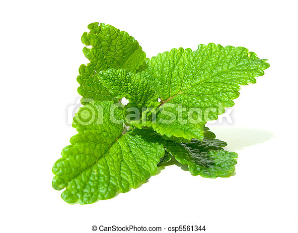 lemon balm - csp5561344