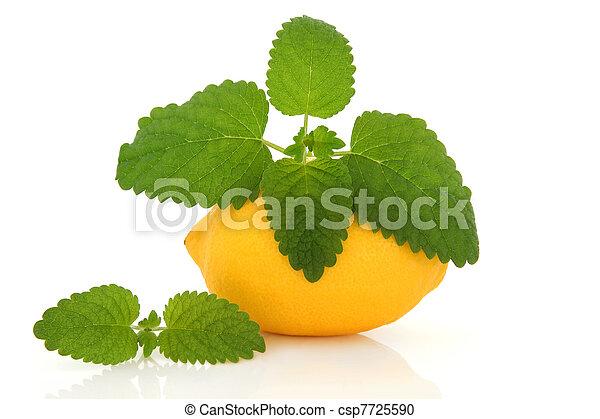 Lemon Fruit and Lemon Balm Herb - csp7725590