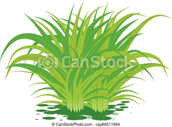 lemon grass on white background vector design - csp66511944
