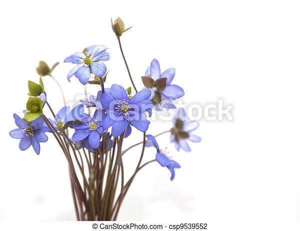 lente, flowers., bos - csp9539552
