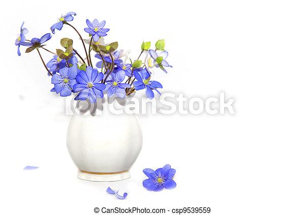lentebloemen, bos - csp9539559