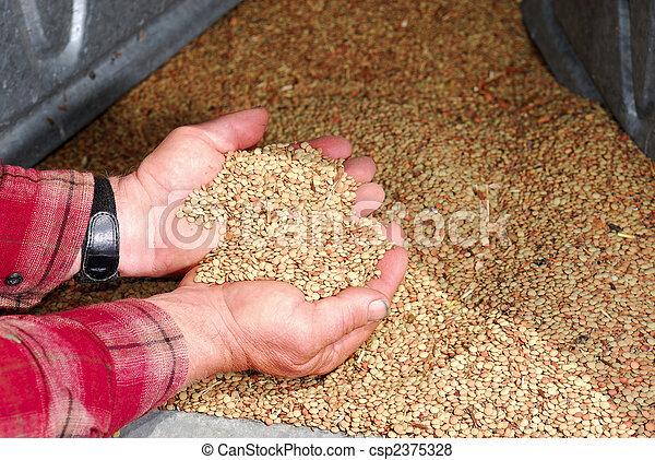 Lentils in Farmers Hands - csp2375328