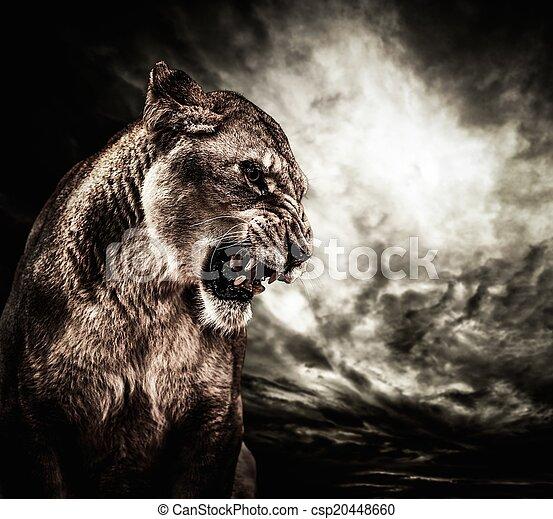leoa, rugindo, céu, contra, tempestuoso - csp20448660