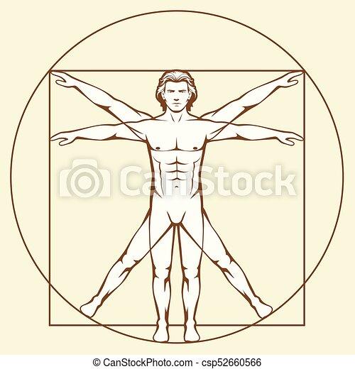 Leonardo Da Vinci Vetruvian Man Human Anatomy
