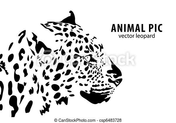 leopárd - csp6483728