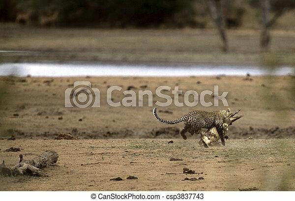 Hyena Vs Crocodile