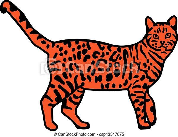 Leopard bengal cat orange - csp43547875