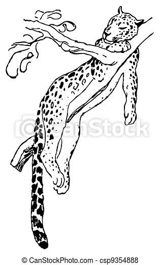 Leopard - csp9354888