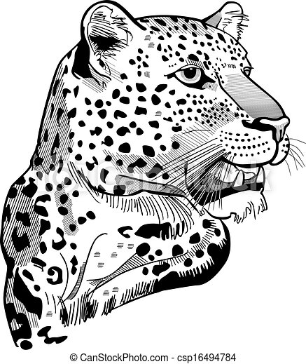 Leopard Head - csp16494784