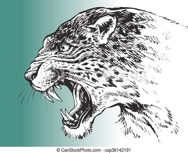 leopard head isolated - csp36142191
