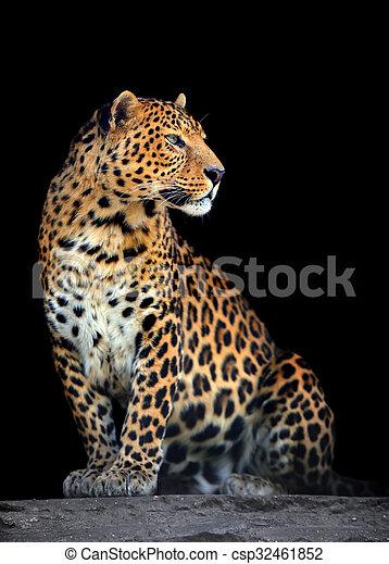 Leopard portrait on dark background - csp32461852