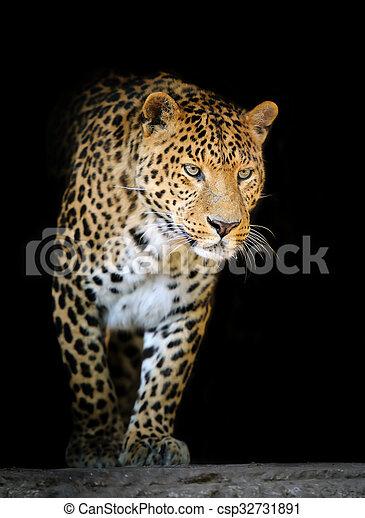 Leopard portrait on dark background - csp32731891