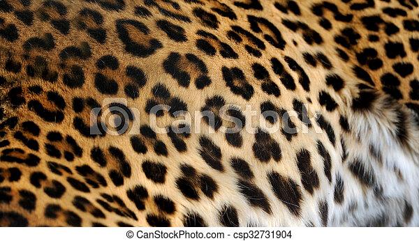 Leopard portrait on dark background - csp32731904