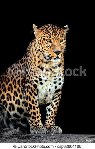 Leopard portrait on dark background - csp32884108