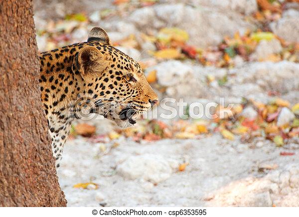 Leopard sitting in the grass - csp6353595