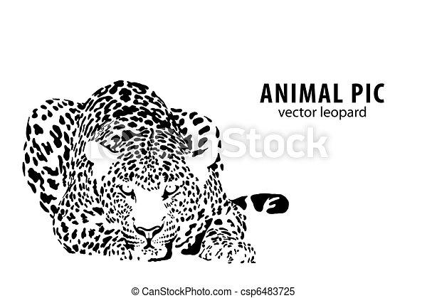 leopardo - csp6483725